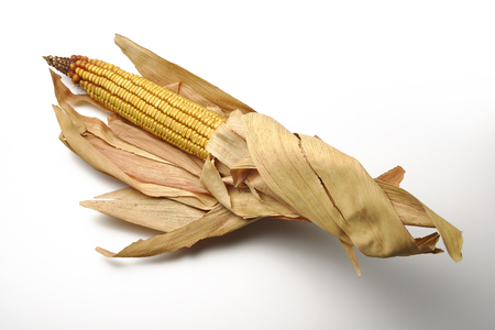 dry leaf: Single Mature maize ear on white