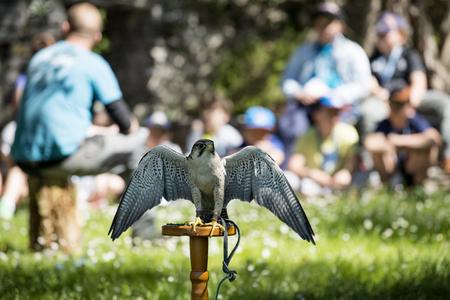 niño parado: Varenna, Italia - 9 de mayo de 2017: Lago de Como, los jóvenes estudiantes en la lección de Falcons en el castillo de Vezio