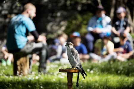 niño parado: Varenna, Italy - May 9, 2017: Lake Como, Young Students at Lesson on Falcons in Castle of Vezio