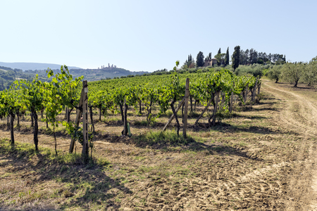 Chianti Vineyards on the Siena hills in Tuscany Stock Photo