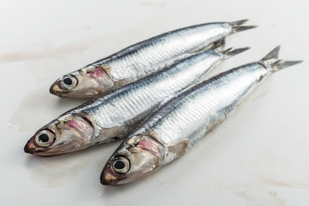 Three whole fresh anchovies isolated on white background