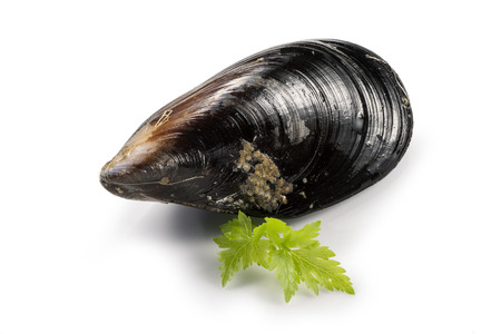 Raw fresh mussel and parsley Фото со стока