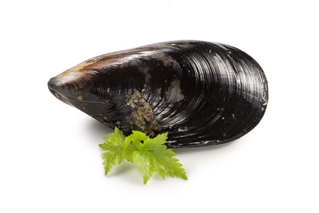 Raw fresh mussel and parsley Imagens