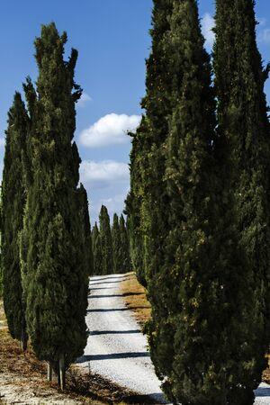 Allée typique avec des cyprès dans les collines siennoises en Toscane