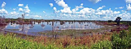 Marshes of the Venezuelan plains Stock Photo