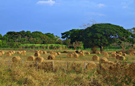pastureland: Agriculture in the plains Stock Photo