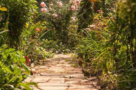 stone path: stone path in a garden in the summer, sunny day