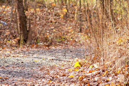The path in the autumn forest with red leaves Stock Photo