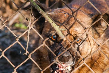 perro malvado corre a picar a través de la cerca de malla