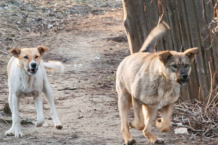 acquaint: two street dogs are introduced at the meeting