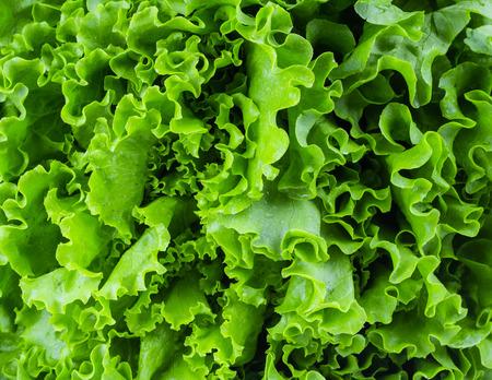 Fresh lettuce leaves, close up. Stockfoto