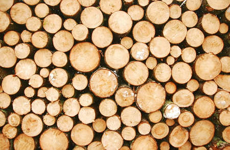 Cut round logs waiting for transport