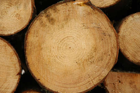 Close up of a cut tree trunk, showing Age rings