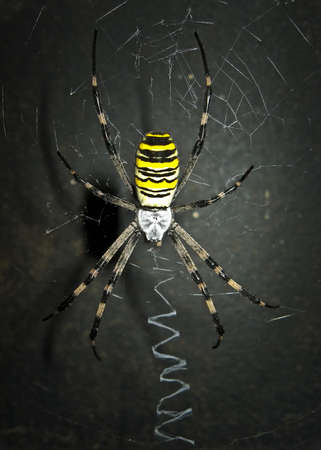 Frightful and dangerous spider on the dark background. Stock Photo