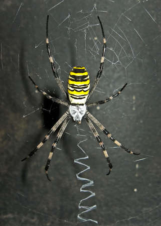 Frightful and dangerous spider on its own net.