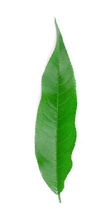 Colorful peach leaf isolated on white background.