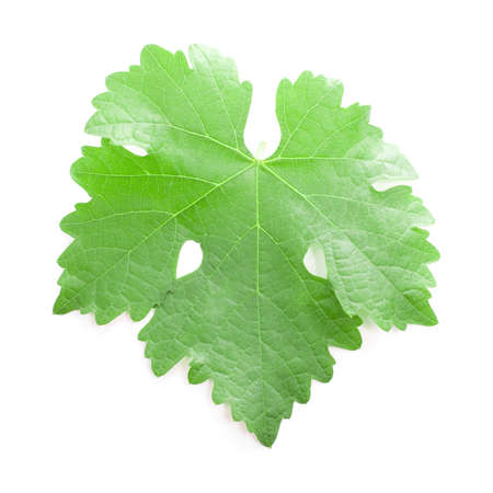 Colorful grapes leaf isolated on white background