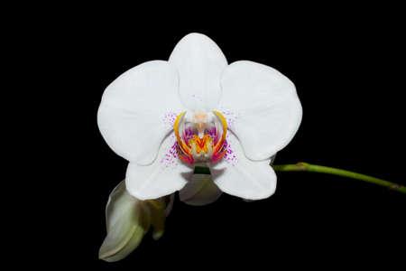 Very beautiful flower against the dark background. Stock Photo