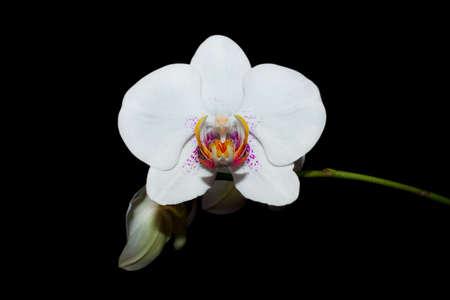 Very beautiful flower against the dark background  Stock Photo
