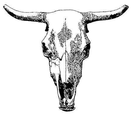 황소 자리: 벡터 가축 두개골 흰색 배경에 고립입니다.