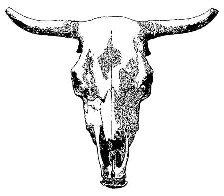 animal skull: Vector livestock skull isolated on white background. Illustration