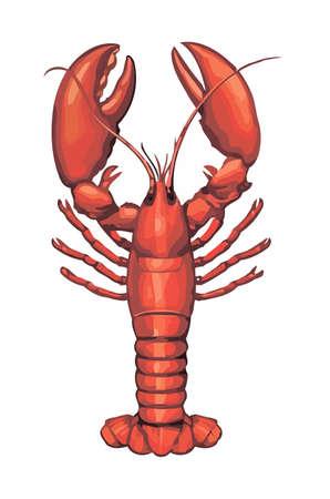 pazur: Pojedynczy homar wektor na białym tle. Ilustracja