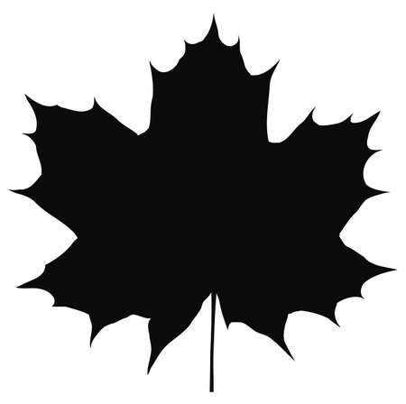 Silhouette of maple leaf isolated on white background.