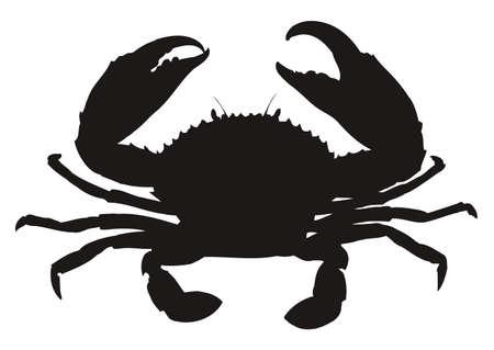 cangrejo: Silueta solo cangrejo aislado en fondo blanco