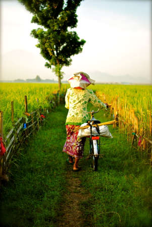 villager: villager guiding her bicycle on footpath among the rice field Stock Photo