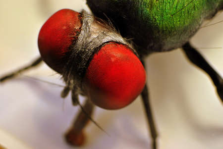 housefly: close up artificial housefly