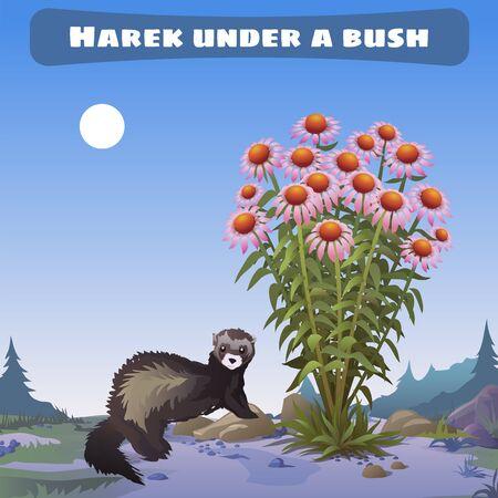 mongoose: Harek under a bush