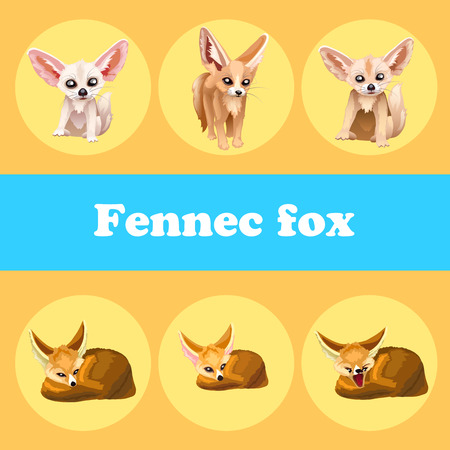 poser: Cute set fennec fox on a yellow background, 6 icon