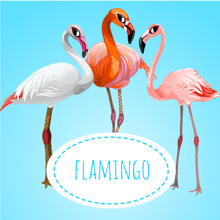 looking straight: Three beautiful flamingos on a blue background, space for text