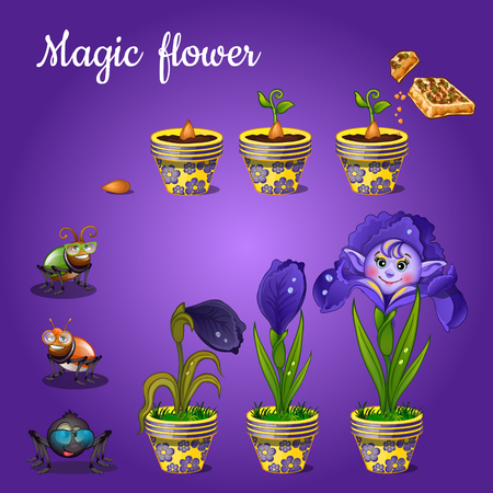 ear drop: Stages of growing magic blue flower Illustration