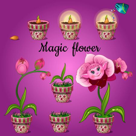 ear drop: Cultivation stage magic flower Phalaenopsis Illustration