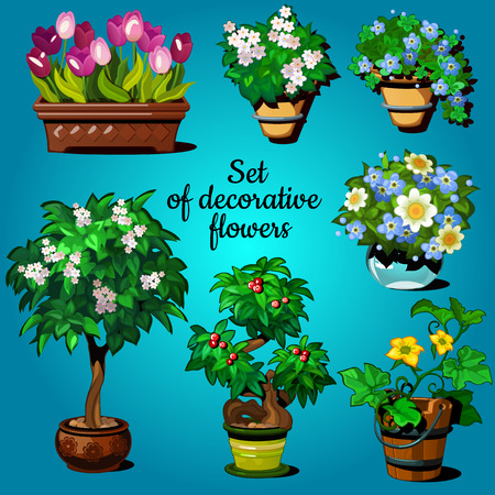 house plants: Set of decorative house plants on a blue background