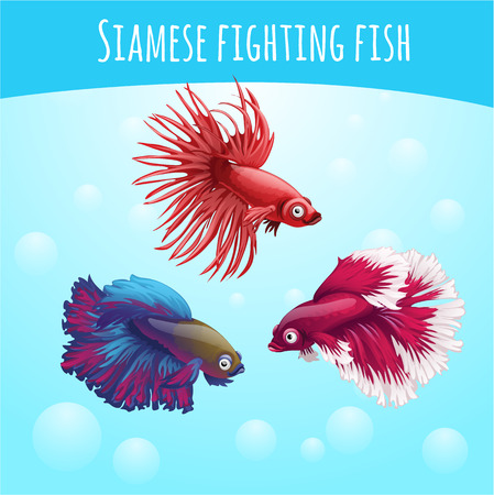 deepsea: Three vector siamese fighting fish, blue and red, on a blue background