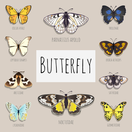 Pattern set of butterflies with space for text, samples of butterflies