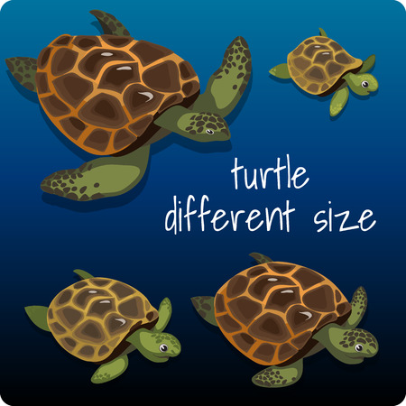 tremendous: Four turtles different size with space for text