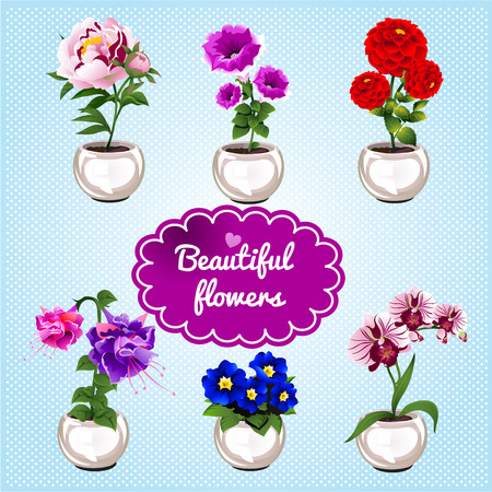 houseplant: Cute houseplant in pots on a blue background Illustration