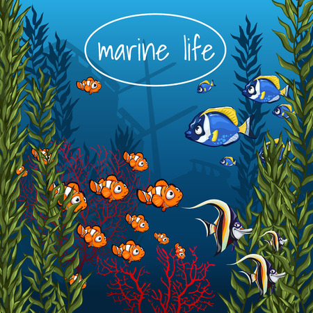 under water grass: The marine life in bright colors