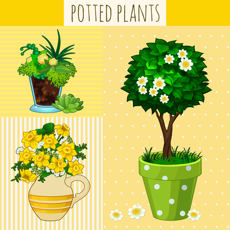 window sill: Three different flowers in pots on a yellow background