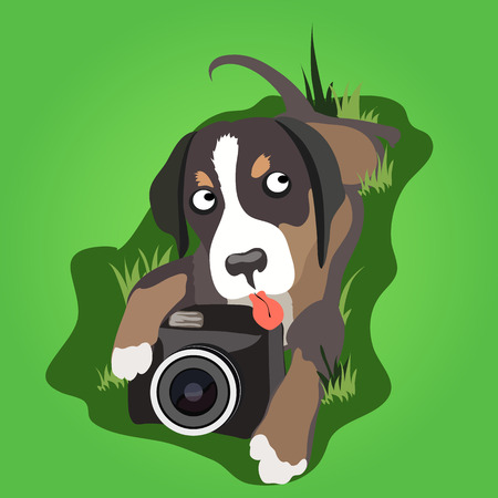 thoughtfulness: Lop-eared dog lays with a camera on the grass
