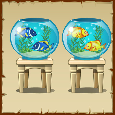 Two aquariums with fish on wooden stools