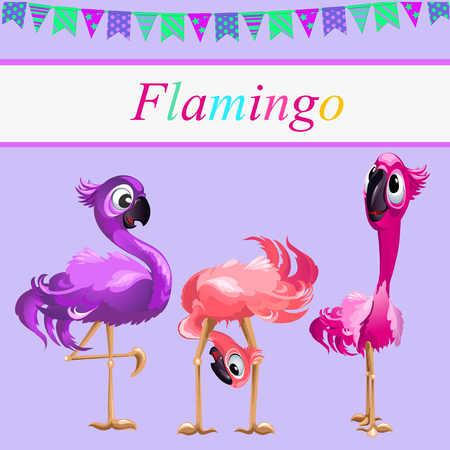 oddity: Three curiosity Flamingo on a pink background