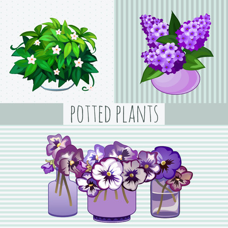 window sill: Purple flowers in pots, potted plants on a light background