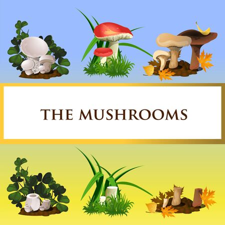 mycology: Icons of wild mushrooms and their growth, six icons