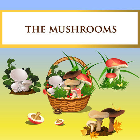 mycology: Collection of forest mushrooms and basket with mushrooms