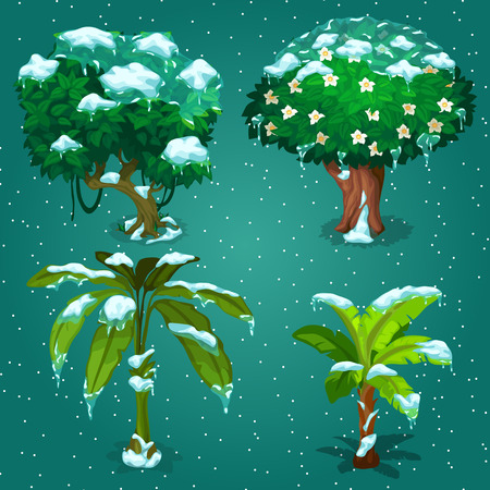 hoar frost: Four tropical plants in the ice on a green background