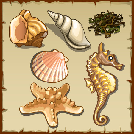 seashell: Decor of seashells and seaweed, six icons on a parchment background